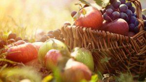 Осенью уделяйте особое внимание питанию!